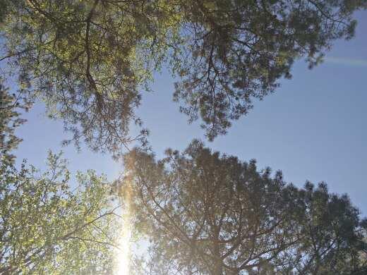 Gruß der Bäume
